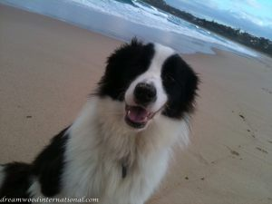 20110612-beach-boy