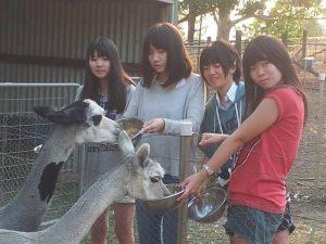 japanese-farmstay-11