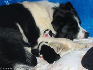 Puppies_001