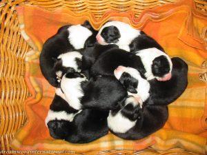 Puppies_2007_Week_2_002