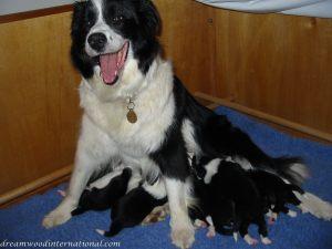 Puppies_2007_Week_2_005
